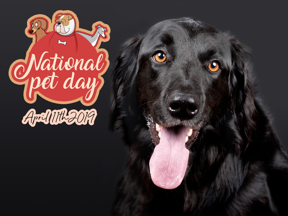 National Pet Day 2019 Wallpaper