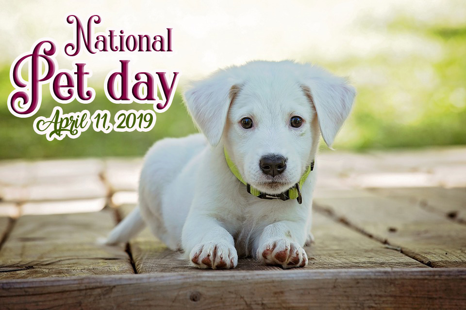 national pet day status for facebook