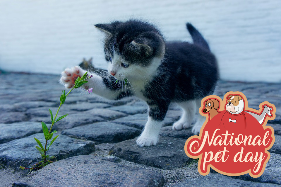 national pet day 2019 images