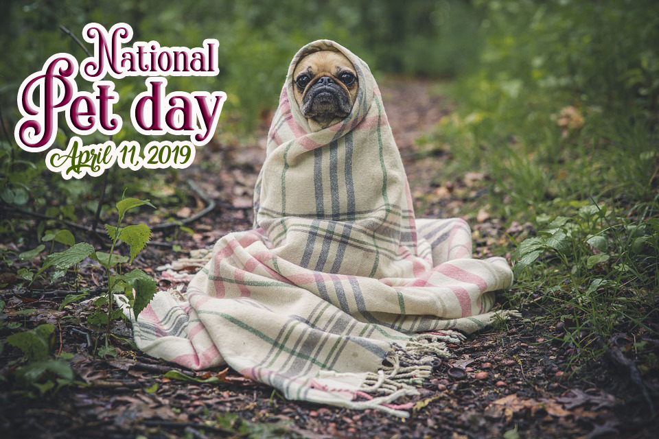 pet day images